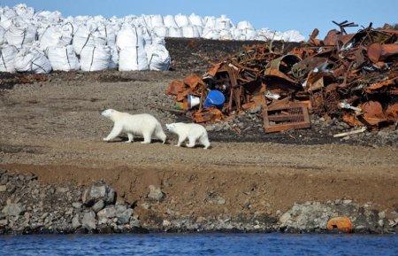 Когда окупится первая в Арктике российская система обращения с отходами