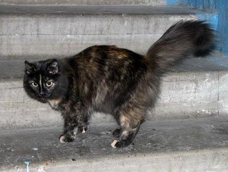 Пострадавший от действий черных риелторов юноша спасен благодаря своей кошке