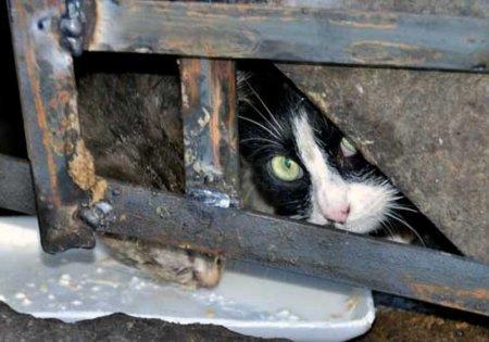 Минстрой запретит застройщикам замуровывать кошек в подвалах