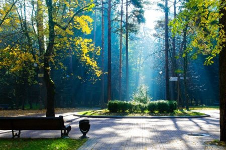 В каком районе Москвы откроют тактильный сад