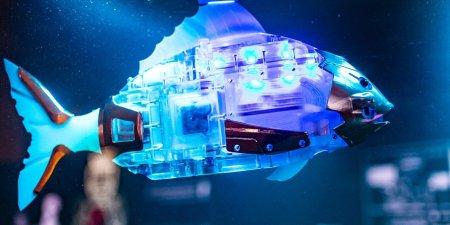 На ВДНХ открыли первый в стране пруд с рыбами-роботами